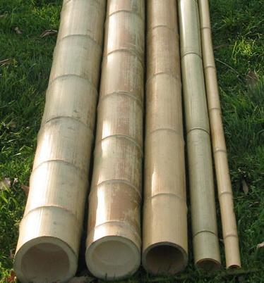 Bamboe kopen
